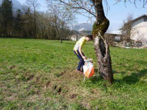 frontale contro un albero